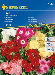 Floks Mix Phlox drummondii